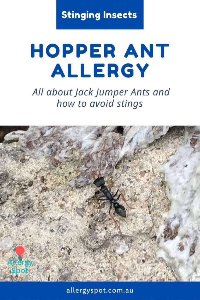 Jack Jumper ant or hopper ant allergy. Where hopper ants live, symptoms of allergic reactions and how to avoid stings if you have a hopper ant allergy.